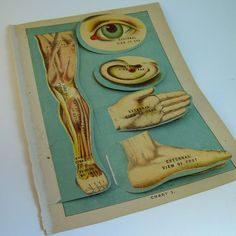 Old anatomy books always make me swoon, and this one has pop-ups!