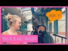 Antwoord op vragen   PaardenpraatTV - YouTube