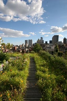 New York City Rooftop., Goode Green | Remodelista Architect / Designer Directory #RooftopGarden