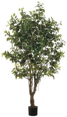 Allstate Floral and Craft Outdoor Ficus Tree, 6-Feet, Green *** Learn more by visiting the image link.