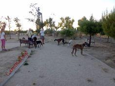 Área Canina Av. Pablo Iglesias   caminadogs