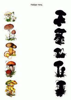 тематическая неделя грибы