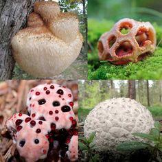 Conoce los 13 tipos de hongos más extraños que existen.