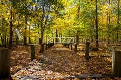 walkway and autumn trees. - Image of walkway and autumn trees.