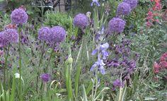 LOOS van VLIET - Garden Haarlem