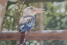 The Happy Pose. (Female cookaburra) by Silvia D'almeida Coloured pencils on Canson Mi-Tientes Tex sanded paper. Coloured pencils used are Caran D'Ache Luminance, Pablos, Faber Castell Polychromos and Prismacolor Premier. Online Gallery, Art Gallery, How To Draw Fur, Art For Sale Online, Polychromos, Coloured Pencils, Color Pencil Art, Beautiful Drawings, Australian Artists