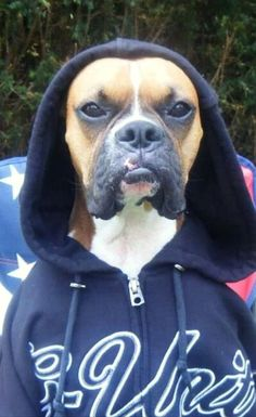 19 Reasons Boxers Are The Worst Dogs To Live With