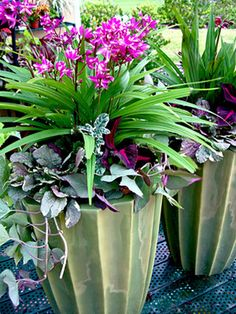 Variegated sweet potato vine, carpet bugle and ground orchids