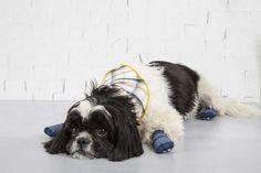 Com esse carinha esparramado, podemos dar adeus ao peso da existência.   11 cachorrinhos usando meia que vão te lembrar que o mundo é lindo
