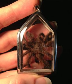 Real Dry Preserved Pink Toed Tarantula Pendant Necklace by Bonelust on Etsy