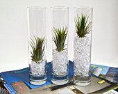 Three Mini Hanging Ceramic Pots with Air Plants by eGardenStudio