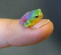 cute rainbow frog :)