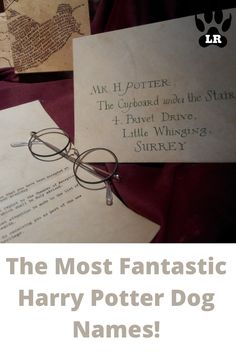 This article is filled with 170+ of the best male and female character names! As an ABSOLUTE die-hard Harry Potter FAN! #List #Puppys #Cute #Boy #2020 #2019 #Unisex #Short #White #Husky #Food #Military #Nature #Little #Boho #BerneseMountain #Greek #List #Popular #Golden Retriever #Cutest #French #Rare #Rustic #Lab