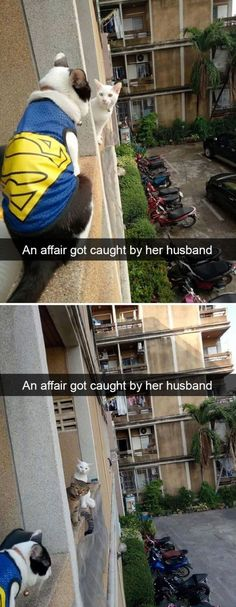 19 Funny And Curious Cat Snapchats #funny #picture