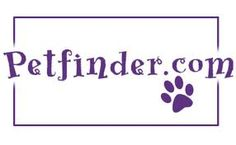 "LOOKS LIKE A DOODLE TO ME!-IMPORTANT FACTS ABOUT USING ""PETFINDER"" – Doodle Rescue Collective Inc."