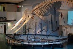 whaling museum on nantucket