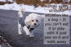 Dog Quotes. Check out the rest of our favorite dog quotes.