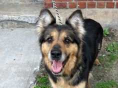 SAFE --- SUPER URGENT - 05/14/14  Brooklyn Center    My name is LAYZA. My Animal ID # is A0999277.  I am a female black and brown germ shepherd mix. The shelter thinks I am about 8 YEARS old.   I came in the shelter as a OWNER SUR on 05/09/2014 from NY 11420, owner surrender reason stated was INAD FACIL.   https://www.facebook.com/photo.php?fbid=802979609714920&set=a.617942388218644.1073741870.152876678058553&type=3&theater