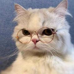 𝑮𝒂𝒃𝒓𝒊𝒆𝒍 🍥 (@uwumeoow) no TikTok   0 curtidas. 43 fãs. ❤🐱 Assista ao vídeo mais recente de 𝑮𝒂𝒃𝒓𝒊𝒆𝒍 🍥 (@uwumeoow). Cute Baby Cats, Cute Little Animals, Cute Cats And Kittens, Cute Funny Animals, Kittens Cutest, Funny Cats, Pretty Cats, Beautiful Cats, Cute Cat Costumes