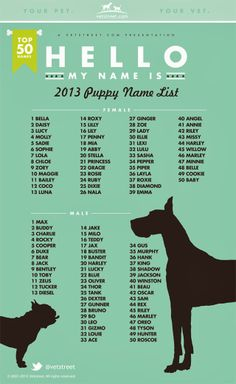 Most popular puppy names from 2013