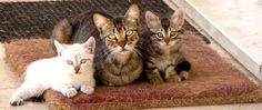 For cat fans Good one! Family Reunion by In Pictura Veritas  on 500px