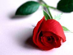 103 Meilleures Images Du Tableau Les Belles Fleurs Animated Gif