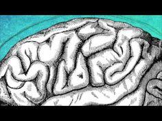 Neurolingüística. El Cerebro y el Lenguaje Humano. - YouTube