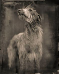 Bogdog | From a unique collection of black and white photography at https://www.1stdibs.com/art/photography/black-white-photography/