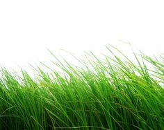 Png Grass by Moonglowlilly.deviantart.com on @deviantART
