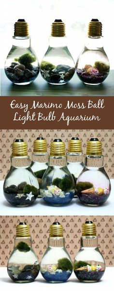 These easy Marimo moss ball DIY light bulb aquariums make a great home for tiny…