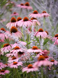 """Plant natives 