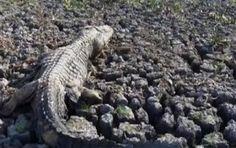 """""""O Grito do Bicho"""": No Tocantins, agentes ambientais tentam salvar ani..."""