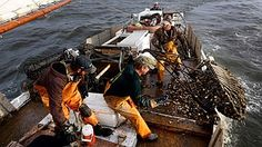 """Crew members pull an oyster dredge in Tangier Sound of the Chesapeake Bay near Deal Island, Md., in 2013. A study found that the Chesapeake Bay shellfishery is a """"hot zone"""" for ocean acidification."""