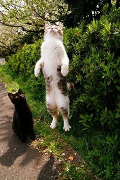 Cat amazed by flying friend.