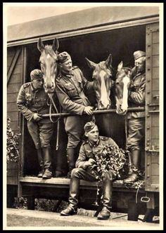 *Cavalry being transported by rail. War Horses, German Soldiers Ww2, Horse Posters, Germany Ww2, Boxcar, War Dogs, Vintage Horse, Military Photos, World War One