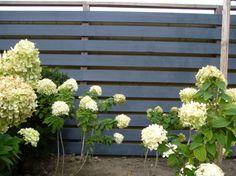 Schutting in Blytunga Svart Fence in Leadgrey Gartenumzaunung in Bleigrau  Moose Färg colors Farben kleuren