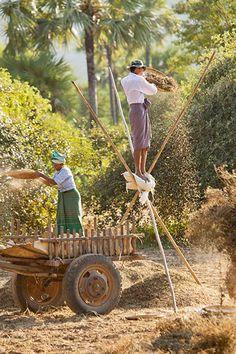Credit: Philip Lee Harvey Philip Lee Harvey, UK – winner, people watching portfolio. Groundnut harvest near Bagan, Burma