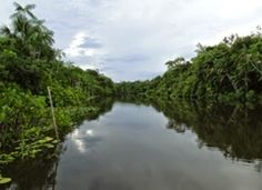 Reserva Extretivista Arioca Pruanà - Oeiras do Parà, Parà