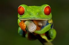 The element of point is shown through the little speckles of lighter green on the frogs head as well as his massive orange googly eyes being to separate points