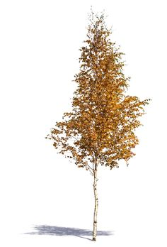 Cut out trees and plants A cutout medium size birch tree in autumn Tree Photoshop, Photoshop Images, Birch Tree Tattoos, Trees Top View, Tree Sketches, Tree Pruning, Tree Tattoo Designs, Celtic Tree Of Life, Plants Are Friends