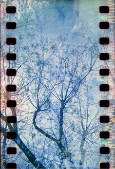 """""""Blossoms"""" by Rachel Rebibo - Holga double exposure sprocket hack"""
