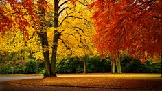 Autumn Impressions by Wolfgang Roschen on 500px