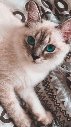 Iphone Wallpaper Cat, Tier Wallpaper, Cute Cat Wallpaper, Animal Wallpaper, Super Cute Animals, Cute Funny Animals, Cute Baby Animals, Funny Cats, Cute Cats And Kittens