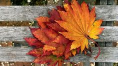 autumn fall color wallpaper background
