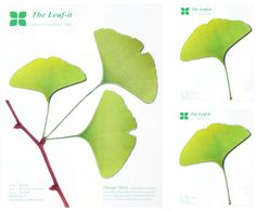 gingko leaf-it stickers by appree from korea