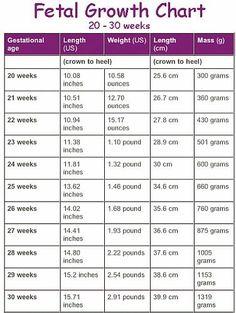 fetal stages by week - Google Search | nursing stuff | Pinterest ...