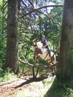 Great cross- country jump: reminds me of Red Raider trails Pretty Horses, Horse Love, Beautiful Horses, Dressage, Cross Country Jumps, Equestrian Outfits, Equestrian Style, Horse Pictures, Horse Photos