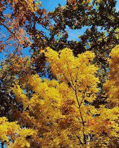 Yellow flowers at Sedona, Arizona❤️ Sedona Arizona, Yellow Flowers, Autumn Fashion, Colours, Plants, Instagram, Fall Fashion, Plant, Planets