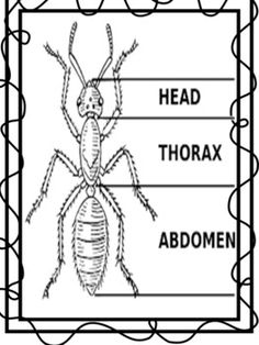 Learn about ants types, ant colonies, and ant body parts for elementary age kids and homeschool. Uses a fun story to help children learn. Insects For Kids, Bugs And Insects, Kindergarten Science, Teaching Science, Ks2 Science, Science Ideas, Preschool Worksheets, Preschool Activities, Listening Activities