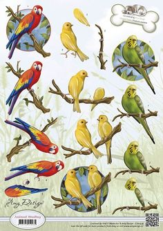 3D Knipvel - Amy Design - Animal Medley - Tropical Parrots